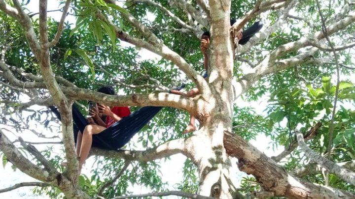 PdPR: Terpaksa berjalan kaki naik bukit, panjat pokok mangga untuk dapatkan rangkaian internet
